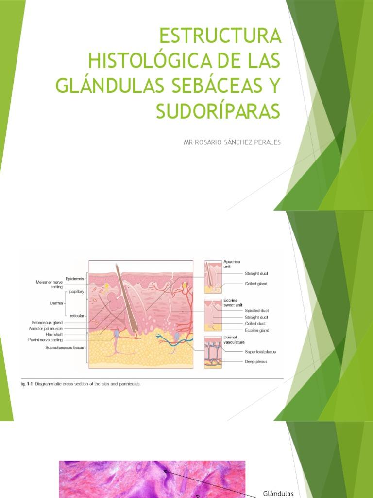 Fisiologia de La Secrecion Sudoral Ecrina y Sebascea e Histolgoia de ...