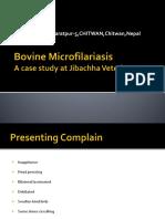Bovine Microfilareasis