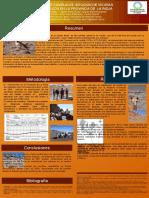 Poster Congreso Camelidos 2015