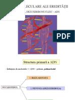 Structura primara si secundara a ADN, curs VI, VII.ppt