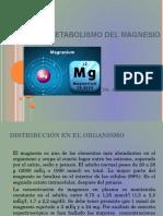 Metabolismo Del Magnesio Joel Aldazoro