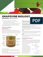 MVWGG Fact Sheet - Grapevine Biology