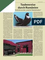 02_Rassen_Arten-Tauben_2008_19