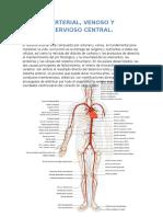 Sistema Arterial