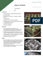 Brownie_nyersen.pdf
