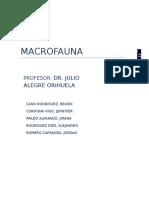 Informe Macrofauna F