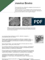Coronavirus, Rotavirus, Akabane Bovino