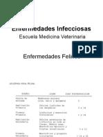 Enfermedades Felinos 20014 2