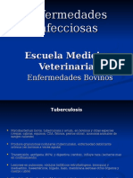 Enfermedades Bovinos 2013 1