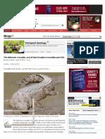 saltwater crocodile-crocodiles part III