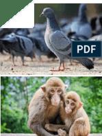 Bbm Animals