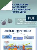 Transportedelamembranacelular 120723213057 Phpapp02 (1)