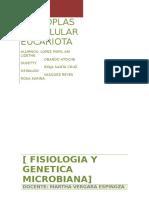 29039677-PROTOPLASMA-CELULAR-EUCARIOTA.docx