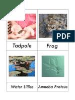 Pond Life 3