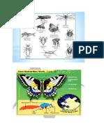 Anatomi Entomologi Lengkap Dengan Gambarnya