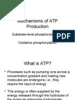 10. Produksi ATP
