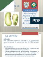 CLASE N°02 MORFOLOGIA Y ANATOMIA DE LA SEMILLA