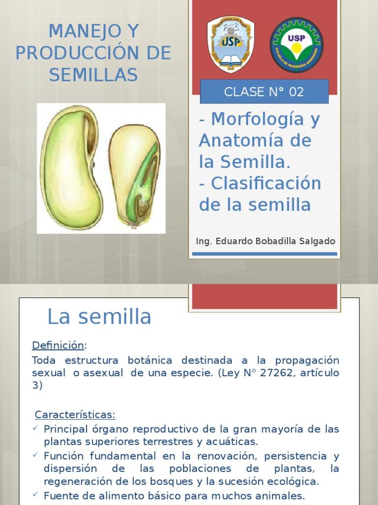 Dorable Anatomía De Una Semilla Fotos - Anatomía de Las Imágenesdel ...