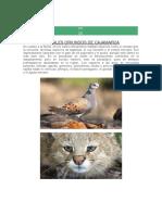 animales de cajamarca