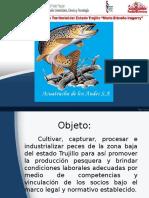 acuatrucha 111.ppt