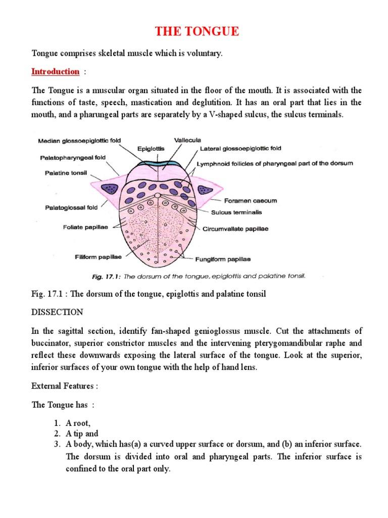 Erfreut Quiz über Anatomie Und Physiologie Kapitel 1 Ideen ...