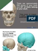 skull bones 030515