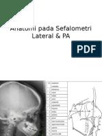 anatomi sefalometri