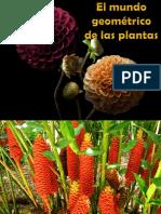 1 El Mundo Geometrico de Las Plantas