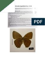 Importante Nymphalidae