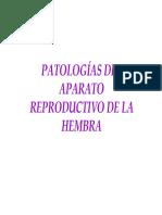 Pato Reprod Hembra