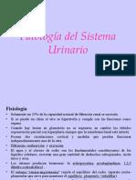 Patologia Sistema Urinario11