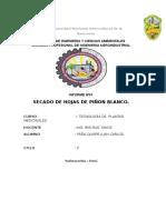 Informe de Plantas