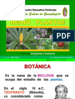 reinoplantae-1-130805205319-phpapp02