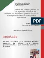 Análise Filogenética e Filogeográfica de Isolados de Pythium