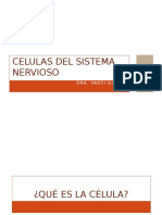 Celulas Del Sistema Nervioso