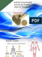 Fisiología ósea