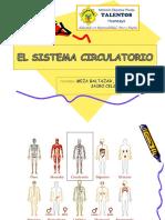 Sistema Circulatorio Celso