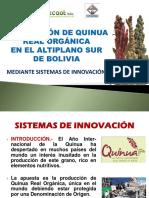 Quinua Real Produccion Quinua Real Altiplano