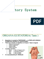 Gustatory System