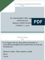 Anatomia+de+los+Organos+Genitales+Femeninos