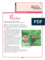 Texas Fruit and Nut Production - Peaches