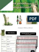 95760740-Cadena-productiva-del-esparragos.pdf
