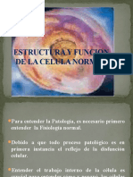 Estructura y Funcion de La Celula Normal (1)