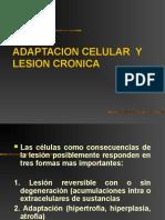 Adaptacion de Celulas y Tejidos Lesionados