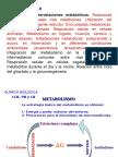 interacciones metabolicas