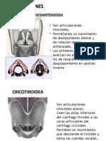 Anatomia Diapos