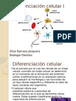 Diferenciación Celular PPT