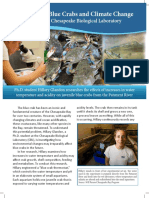 Blue Crab One Pager