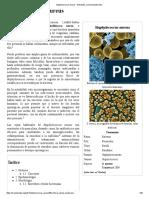 Staphylococcus Aureus - Wikipedia, La Enciclopedia Libre