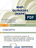 Map Quinasas